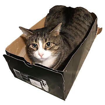 Striped Tabby Cat in Box by juniperdesign