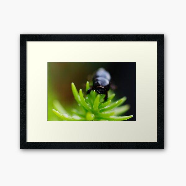 BeetleJuice Framed Art Print