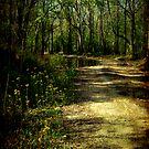 Along The Way by Jonicool