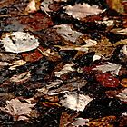Shades Of Brown by Debbie Oppermann