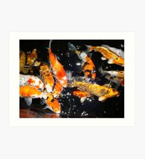 Hungry Koi Art Print