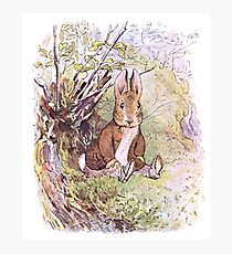 Benjamin Bunny, Beatrix Potter,  Photographic Print