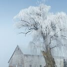 Frosted Willow  by lorilee