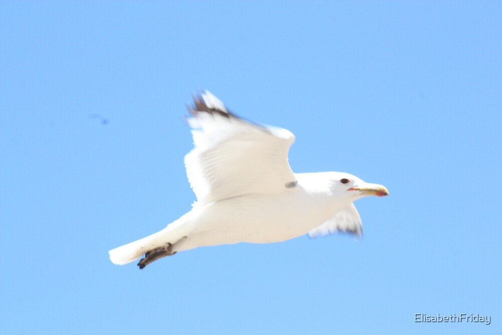 Seagull by ElisabethFriday