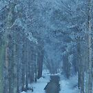 Frosted Woodland Pathway  by lorilee