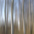 Trees of mildness by Patrick Reinquin