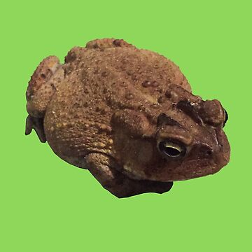 American Toad Cut Out by juniperdesign
