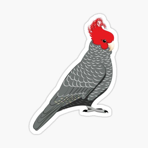 Gang gang cockatoo Sticker