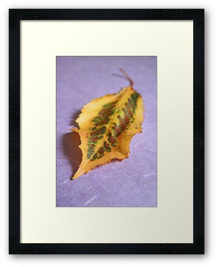 Dappled beauty by Jeanne Horak-Druiff