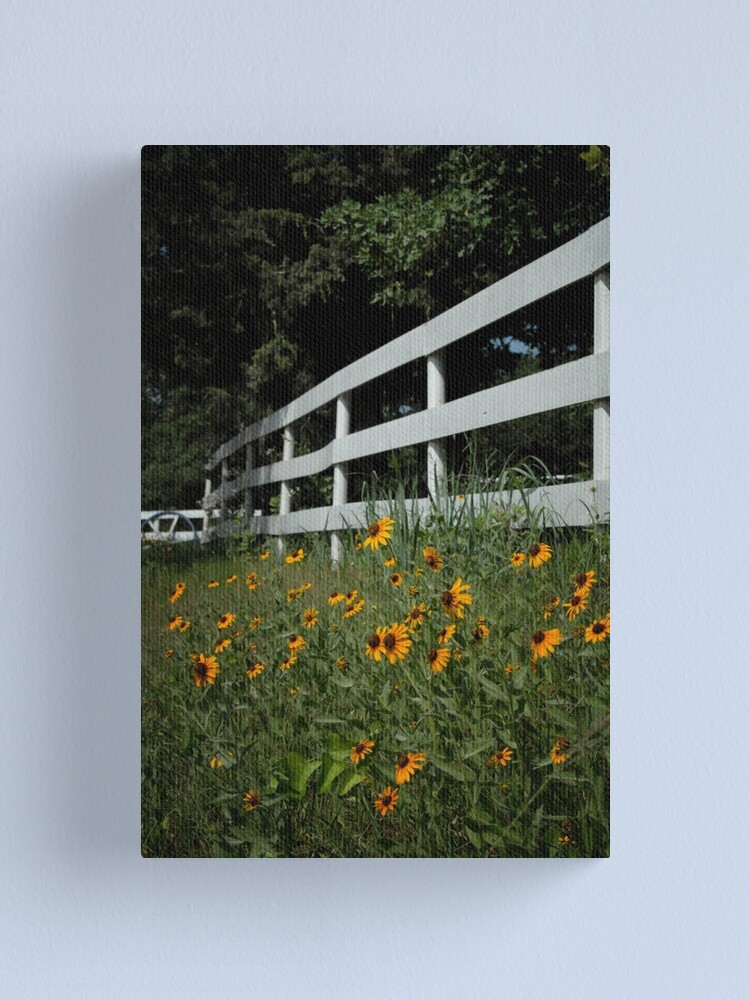 Alternate view of Black Eyed Susans along the Fence Canvas Print