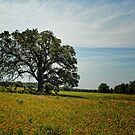 Tree in Field of Gold by Colleen Drew