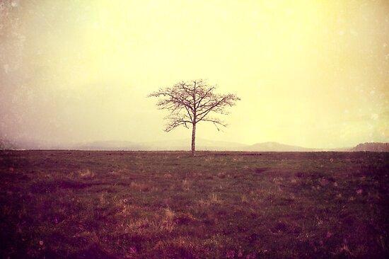 One Tree by Larry  Stewart