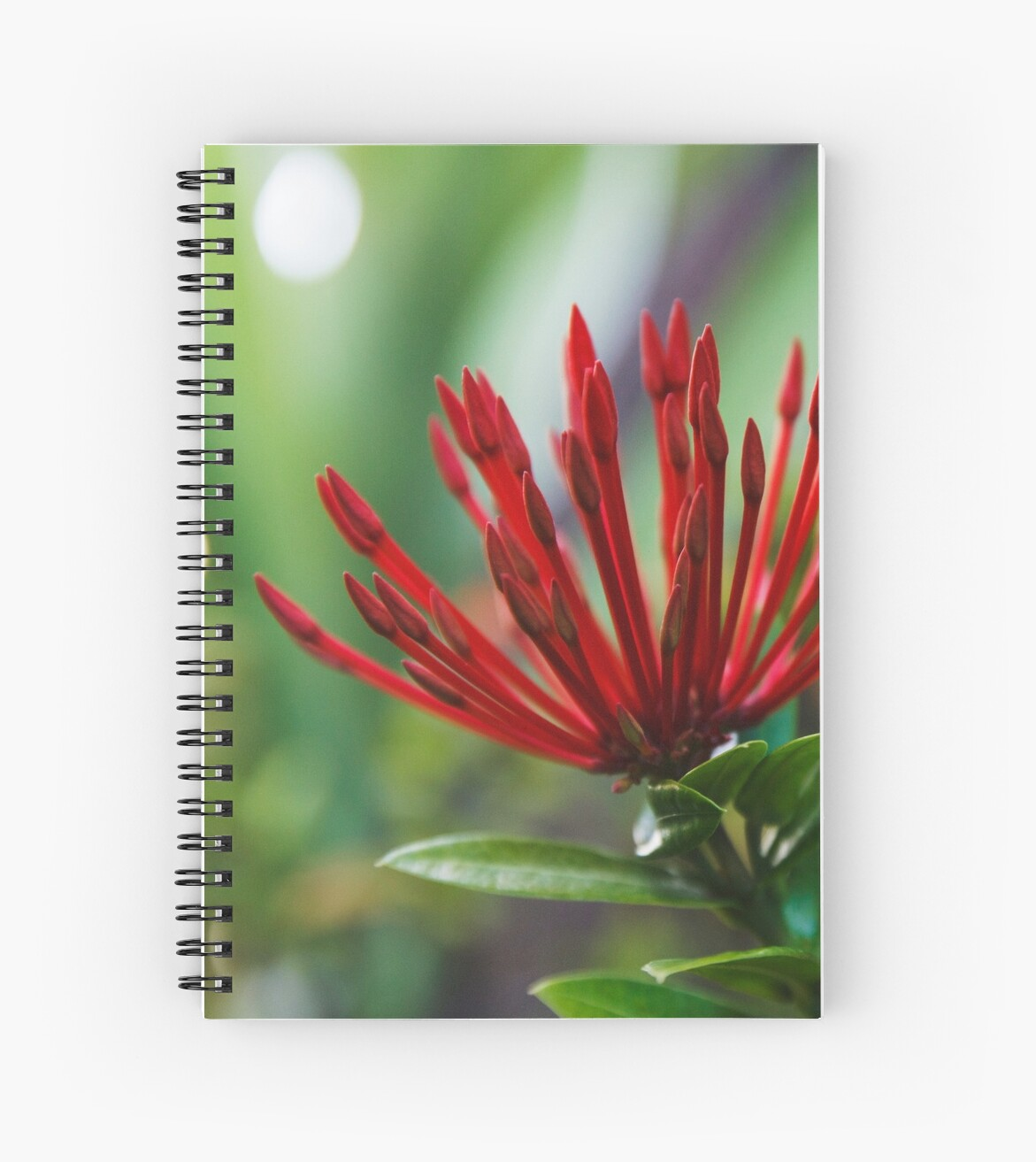 Red Ixora Flowers by DavidLeverson