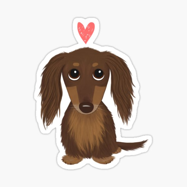 Longhaired Chocolate Dachshund | Cute Wiener Dog with Heart Sticker