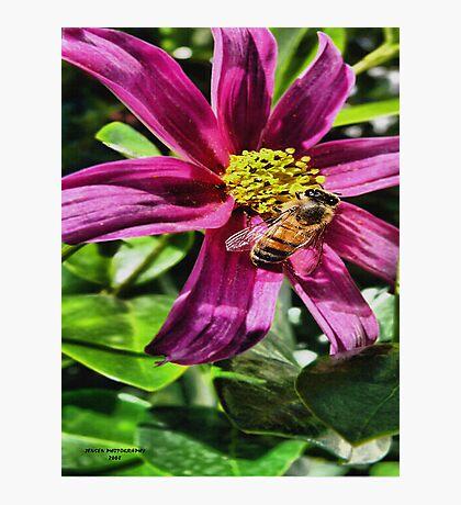 Honey Bee Sweet Photographic Print