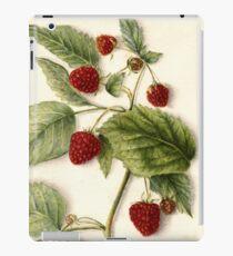 Vintage Raspberry Illustration iPad Case/Skin