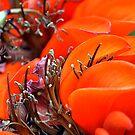 Orange Floral by Clayton Bruster