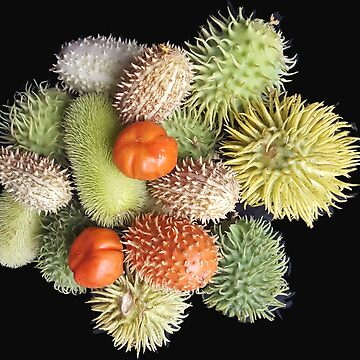 Autum seed pods  by OllieandQuinn