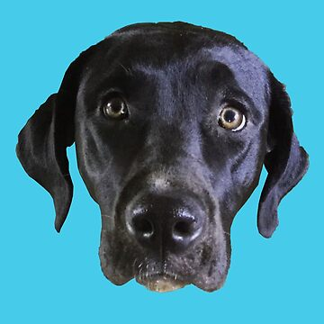 Black Labrador Retriever by juniperdesign