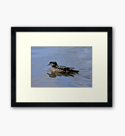 Female Wood Duck Framed Print