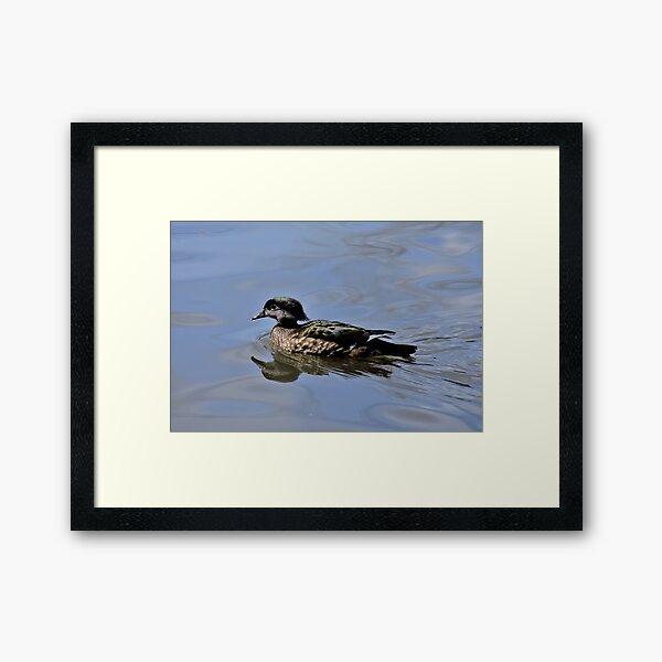 Female Wood Duck Framed Art Print