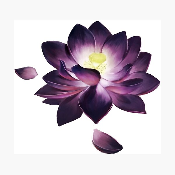 Black Lotus Photographic Print