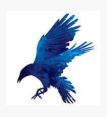 Raven Blue Painting Photographic Print