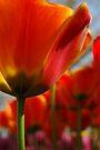 Spring Awakening by christiane