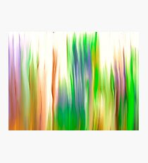 The Beautiful Veil Oil Painting Abstract Photographic Print
