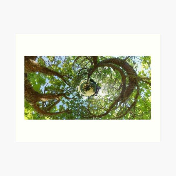 In Treetops Art Print