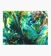 Licuala Palms Photographic Print