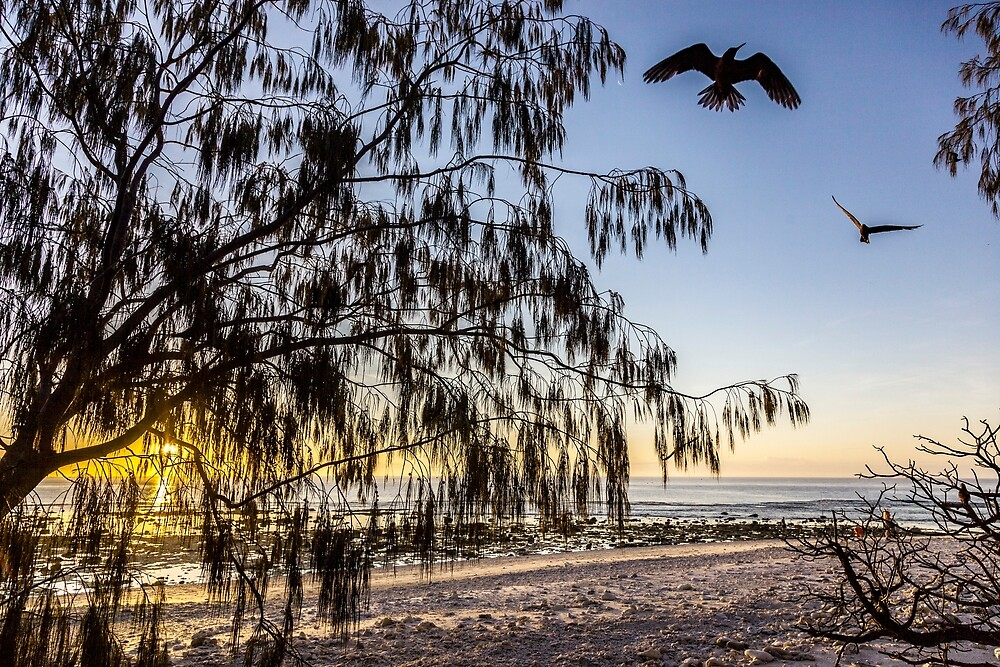 Coming home to roost by David Wachenfeld