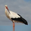 Stork #1 by HelenBanham