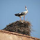 Stork #3 by HelenBanham