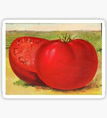Vintage Illustration of a Beefsteak Tomato (1905) Sticker