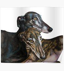 Greyhounds - Galgos Espanol Poster