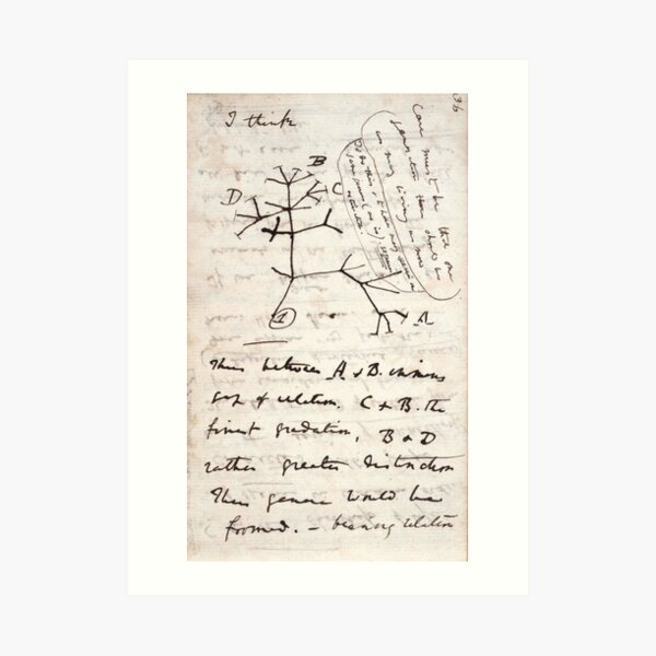 I Think - Charles Darwin 1 Art Print