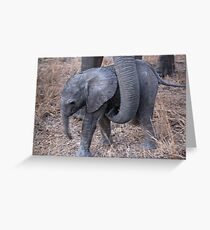 Not Too Close ! Greeting Card