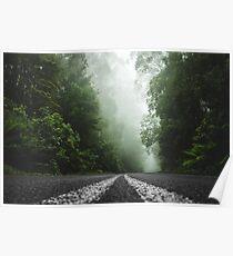 Misty Otway Forest Poster