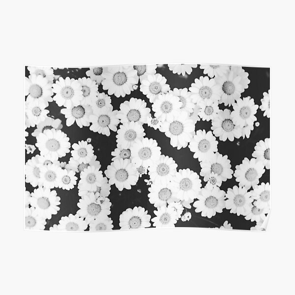 Chamomile flowers Poster