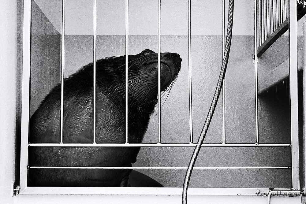 Circus Sealion, waiting for the show by Arnaud Lebret