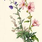 Lavatera and Monkshood (watercolour on paper) by Lynne Henderson
