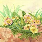 Primrose on Wall (watercolour on tinted paper) by Lynne Henderson
