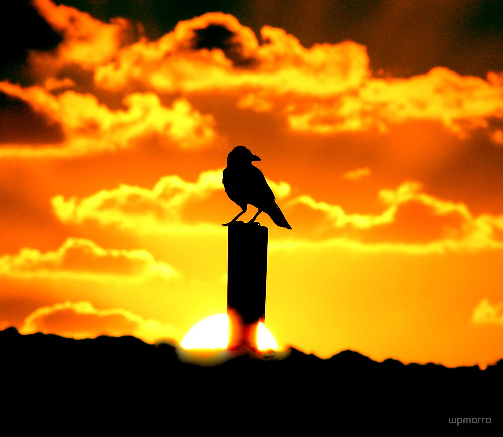 Monkey Mia crow by wpmorro