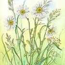 Ox-eye Daisies 2 (watercolour on paper) by Lynne Henderson