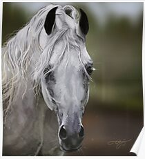 Grey Arabian Poster