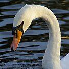 Swan by Maureen Brittain