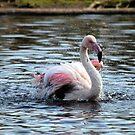 Pretty flamingo by Maureen Brittain