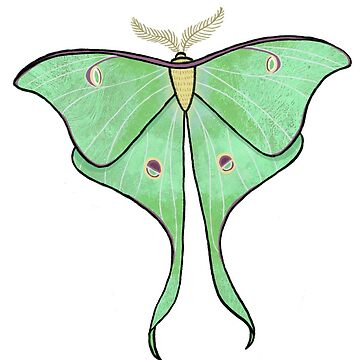 Luna moth by LeaGerard