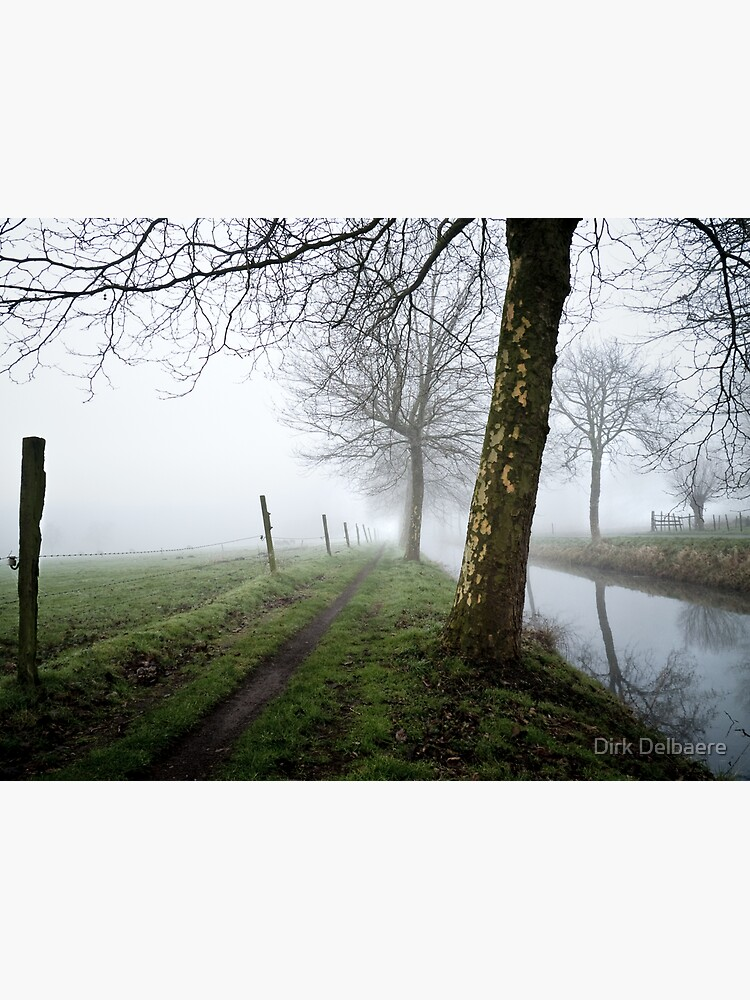 trees in the mist by Delbaere